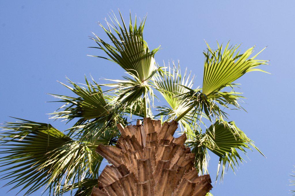 Winter Park Florida Orlando Alfond Inn